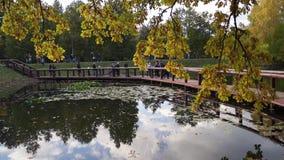 湖的散步的人在公园在一个晴天在早期的秋天 股票视频