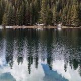 湖的杉木、冷杉和美国加州红杉森林 免版税库存图片