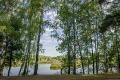 湖的桦树树丛 免版税库存照片