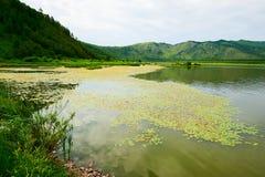 湖的浮萍属未成年人 库存照片