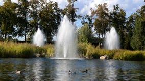 湖的片段,在国立公园公园在基辅附近的Mezhyhiria 股票视频