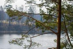 湖的相反岸的看法,在水的太阳强光 免版税库存图片