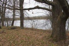 湖的看法在秋天 免版税库存图片