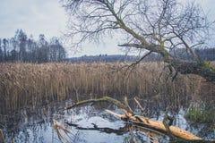湖的看法在秋天 免版税库存照片