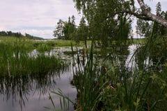 湖的看法 库存图片