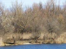 湖的神仙的森林 免版税库存图片