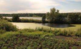 湖的菜园 库存照片