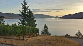 湖的葡萄园 库存图片