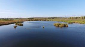 湖的表面:浇灌,围拢由草,一个晴天 通风 股票视频