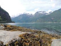 湖的视图 在石头的海草 免版税库存图片