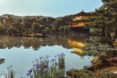 湖的金黄亭子Kinkakuji在春天期间在京都日本 免版税库存照片