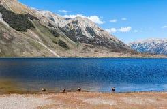 湖皮尔逊/Moana Rua位于Craigieburn的野生生物保护区森林公园在坎特伯雷地区,新西兰的南岛 免版税库存照片