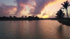 湖空中寄生虫视图在有棕榈的高尔夫球场,晚上,日落 股票录像