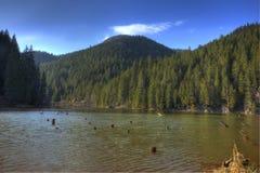 湖红色罗马尼亚 免版税库存图片