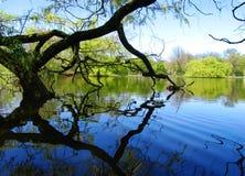 湖结构树 免版税库存图片