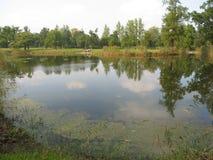 湖结构树 免版税库存照片