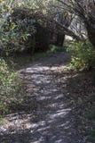 湖罗伯特供徒步旅行的小道 免版税图库摄影