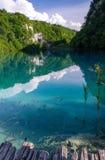 湖美丽的景色有鱼的在清楚的绿松石水、绿色植物树和山岩石在背景,国立公园中 图库摄影