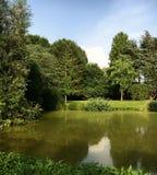 湖自然森林 库存图片