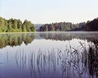 湖芦苇 免版税库存图片