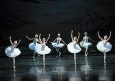 湖芭蕾天鹅湖的反射 免版税库存照片