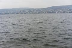 湖苏黎世水和山环境美化与多雨天气 免版税图库摄影