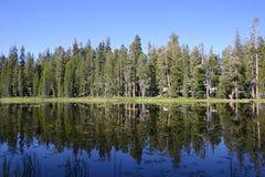 湖被反射的午睡结构树 库存照片