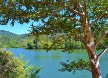 湖视图通过树 免版税库存图片