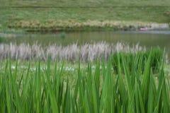 湖边与湖的环境Defocused背景和的领域 免版税库存照片
