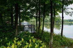 湖边人行桥在雨以后的森林在多云夏日 免版税库存照片
