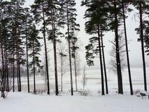 湖边在冬天 免版税库存照片