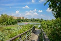湖边在嫩绿的城市晴朗操刀了并且planked人行桥 免版税库存照片