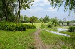 湖边在有城市的草坪落后在背景中在晴朗的夏天d 库存图片