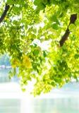 湖边在sunlights的绿色树 免版税库存照片