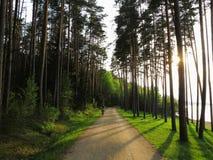 湖边森林散步 免版税图库摄影