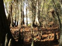 湖边森林 免版税库存图片