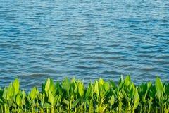 湖边植物 免版税库存照片