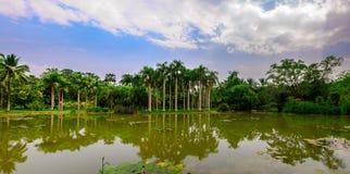 湖边椰子树丛  库存图片