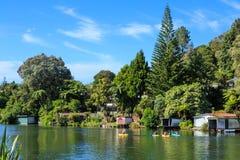 湖边物产在夏天,新西兰 免版税库存图片