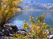 湖边的五颜六色的秋天植物在马默斯MOUNTAIN地区 免版税图库摄影