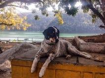 湖边的狗 免版税库存图片