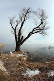 湖边结构树 库存图片