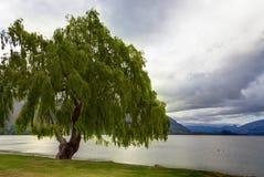 湖边结构树 免版税库存图片