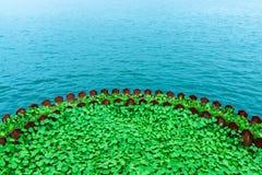 湖边绿色叶子 库存图片