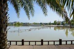 湖边苏铁属和planked道路在晴朗的夏天afternoo城市 免版税库存图片