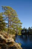 湖边视图在森林 库存图片