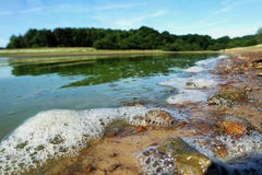 湖边水泡沫 库存图片