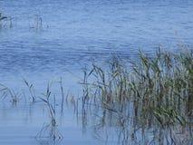 湖边 免版税图库摄影