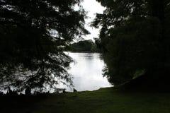 湖通过结构树 库存照片