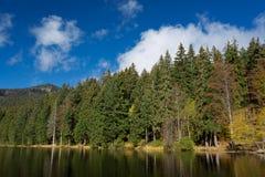 湖阿尔伯在巴伐利亚,在秋天期间的德国 (更总的Arbersee) 库存图片